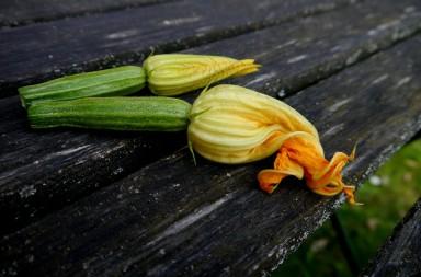 Zucchino