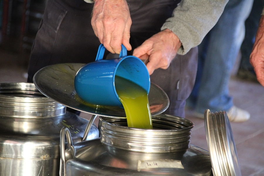 Yields, quality and prices: we talk about 2018 olive oil production
